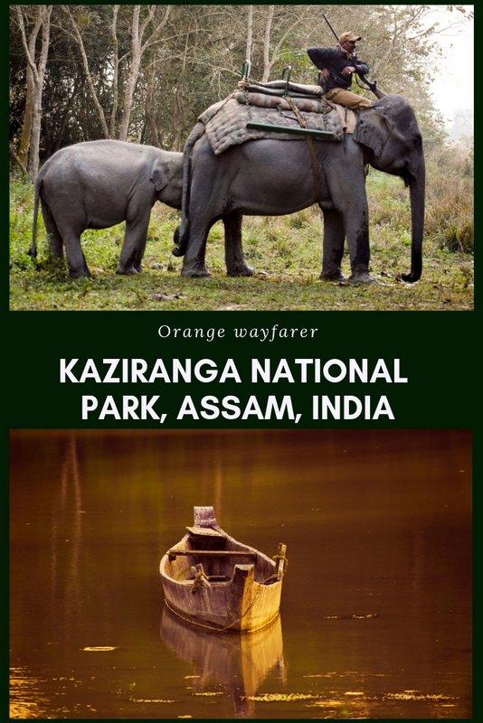 #Kaziranga #india #wildlife #rhino #onehornrhino
