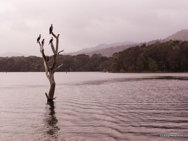 Those cormonants, Periyar lake, Thekkady