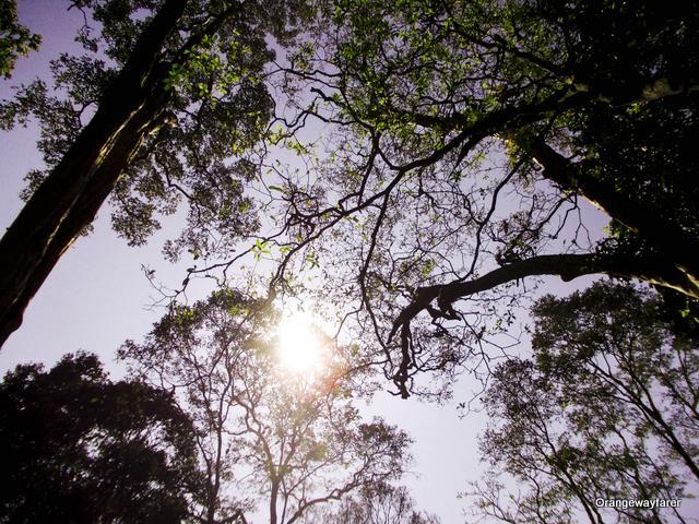 Periyar Reserve, a highlight from Kerala Travel
