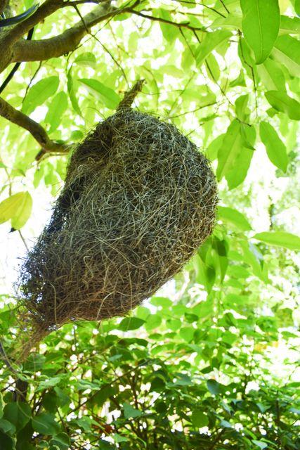 Birds Nest heritage Bagan Hotel