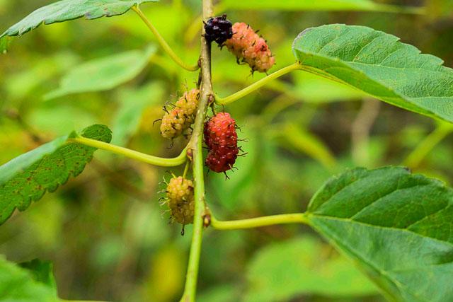 taj madikeri resort & spa, coorg madikeri, karnataka: nature walk