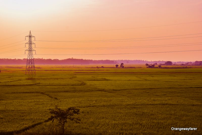 West Bengal Paddy fields electric poles