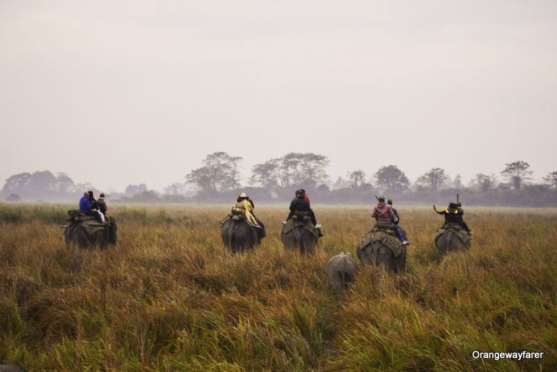 Morning Elephant Safari at Kaziranga