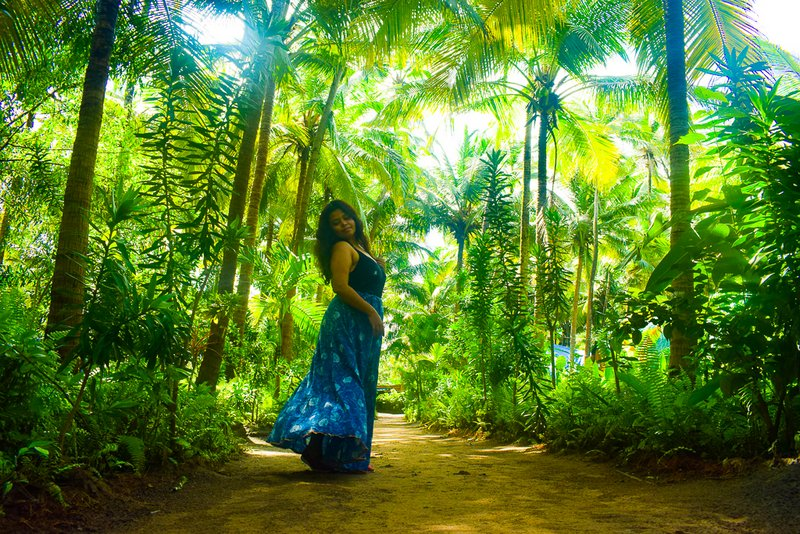 Coconut tree road in Goa: offbeat Goa