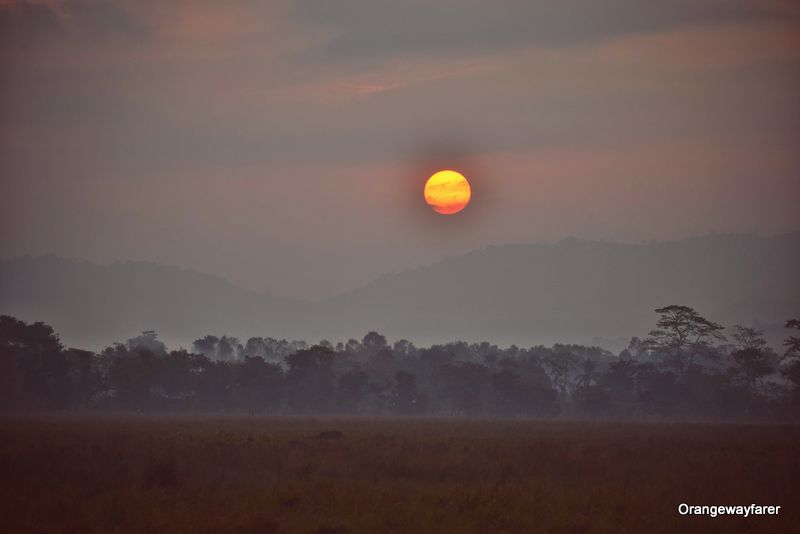 Kaziranga Sunset