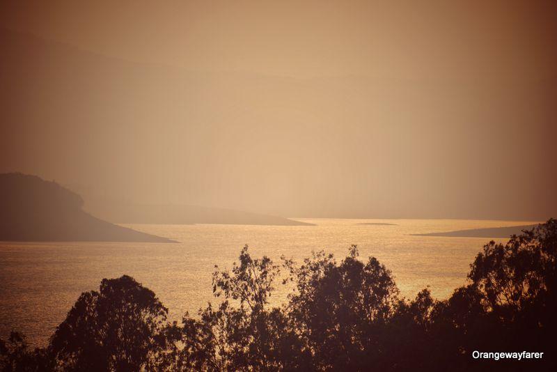 Kaziranga forest