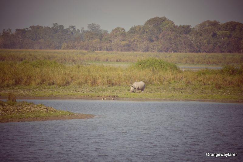 Kaziranga forest and a rhino