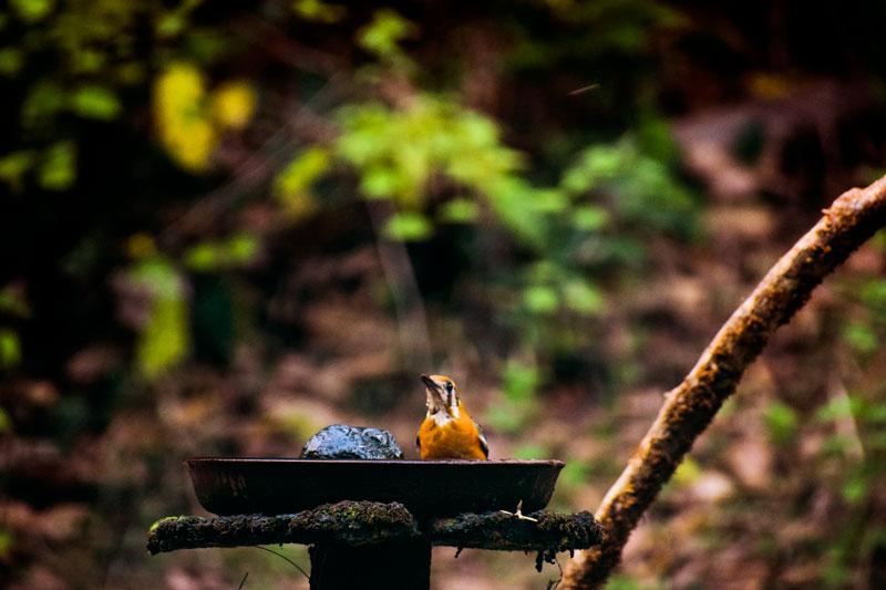 Birding at Dandeli