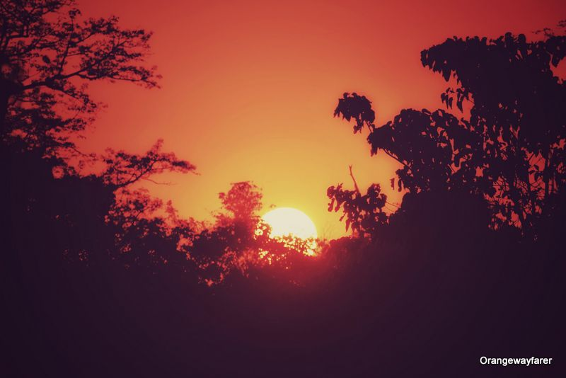 A sunset at Kaziranga