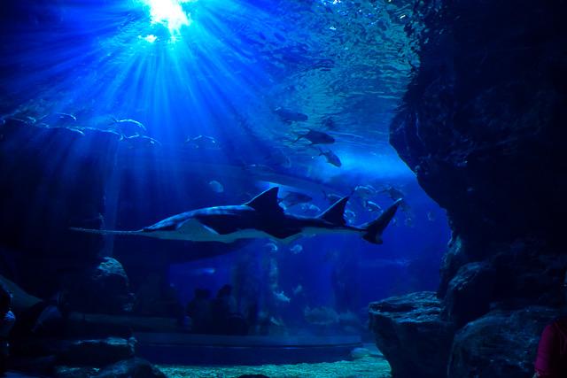 Sea World Marine Life Thailand