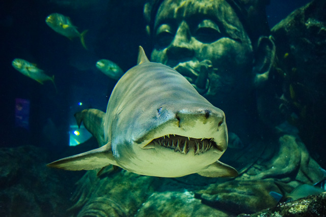 Sea Life SHarks in Bangkok, Thailand