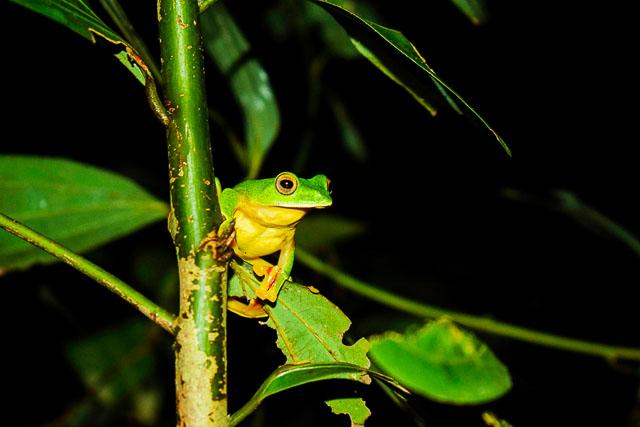 taj madikeri resort & spa, coorg madikeri, karnataka: Nature walk at the rainforest