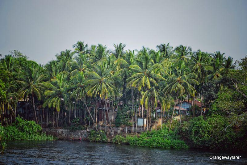 Kali river dandeli
