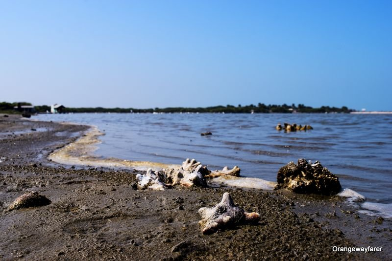 Dhanushkodi Backwaters