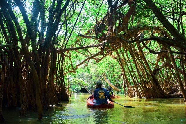 Little amazon tour, Thakuapa. Offbeat things to do in Thailand