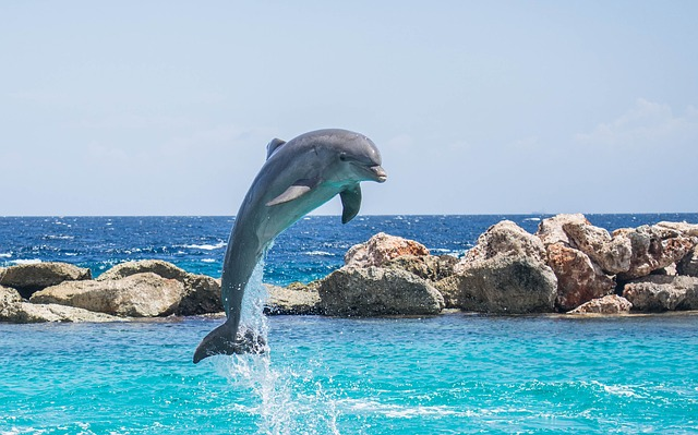 Dolphin watching in Goa