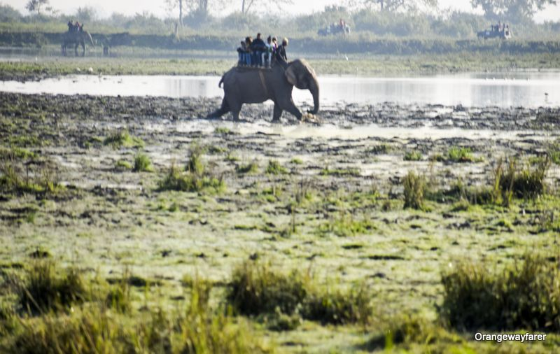 Elephant ride at kaziranga