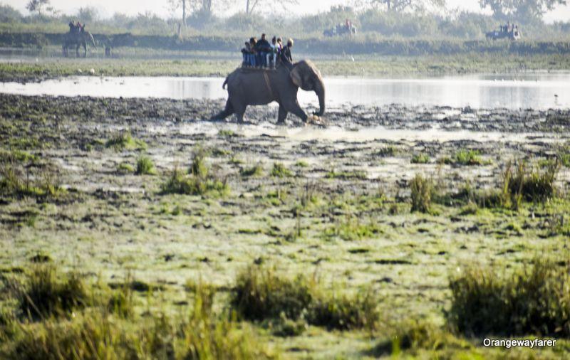 Elephant ride at kaziranga