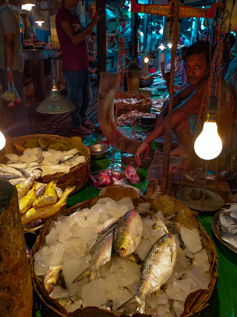 local experiences in Kolkata: a fish market