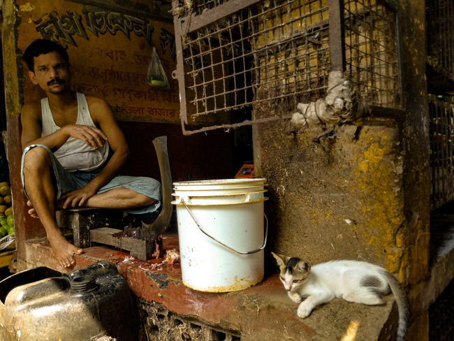 famous fish market in kolkata: cats in Kolkaat fish market