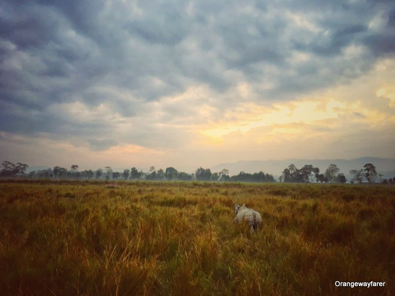 A rather Rainy day at Kaziranga and morning sunrise