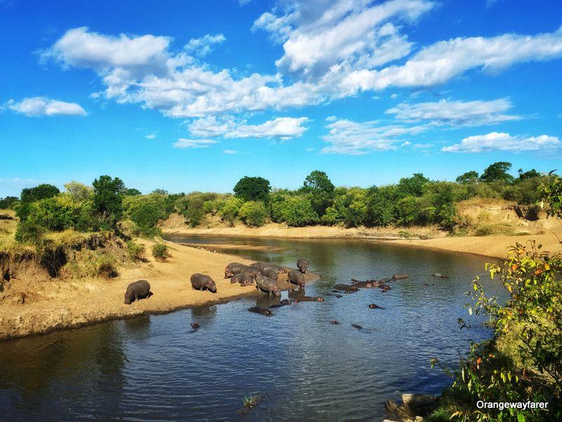 Mara river, Masai mara
