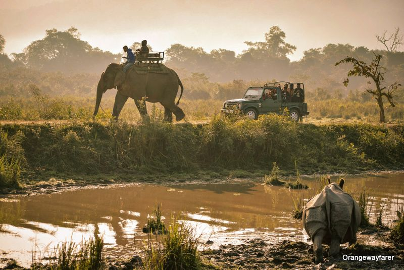 Jungle safari at kaziranga during Sunrise