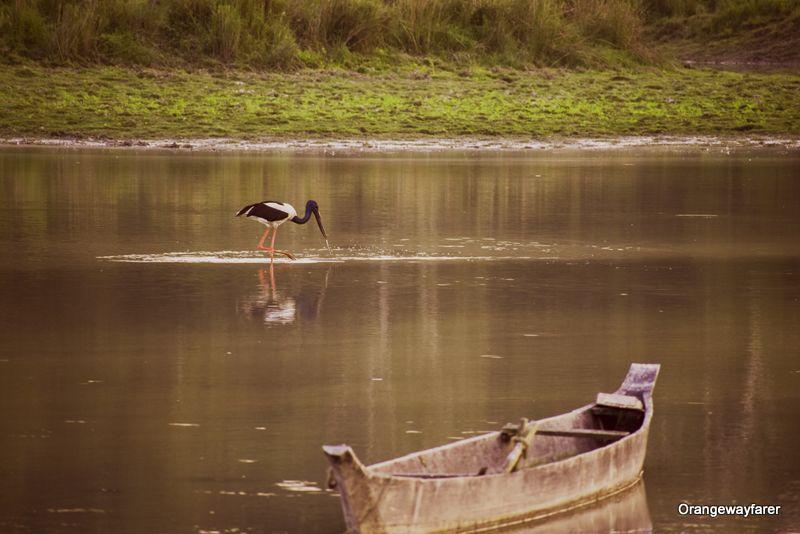 Kaziranga Birding rare birds