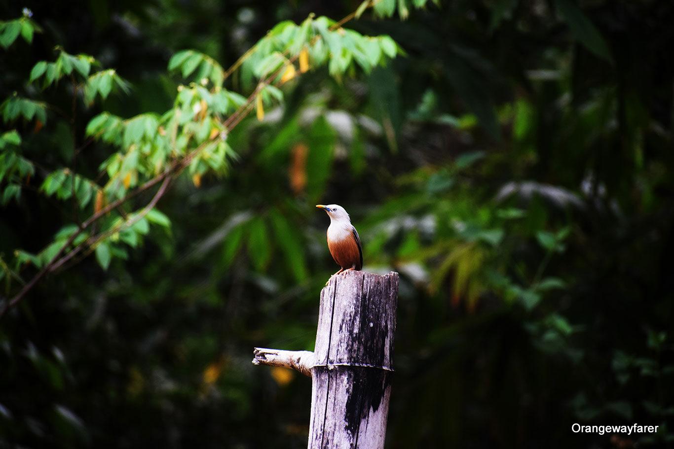 Birding in Karnataka