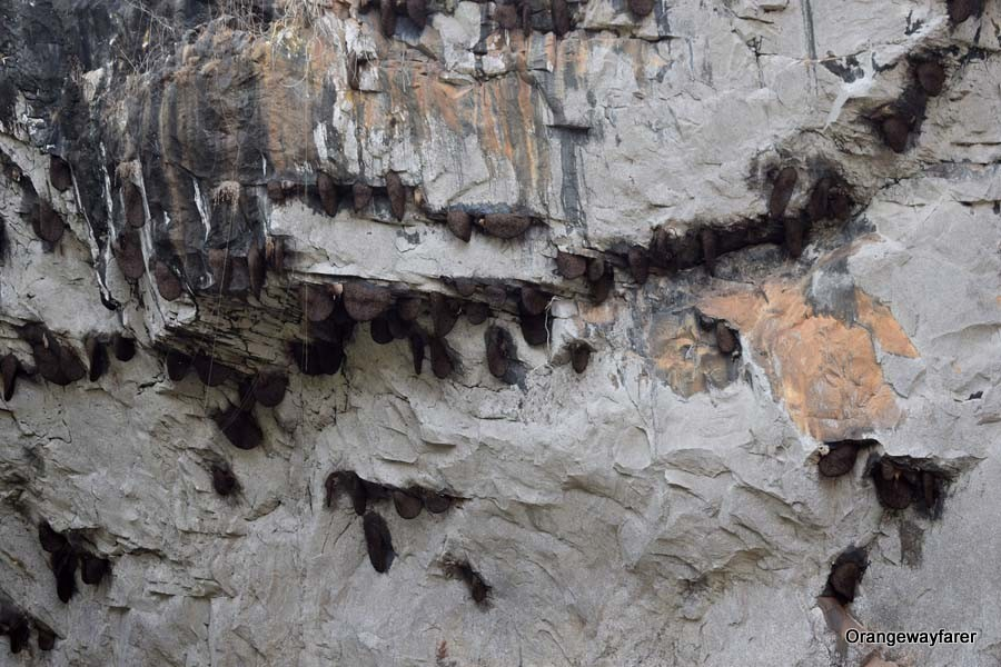 Plenty of bee hives adorning the Synteri rock, away from the grasps of human intrusion!