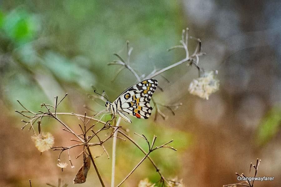 Dandeli Jungle nature walk