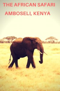 #safari #amboseli #elephants #africansafari