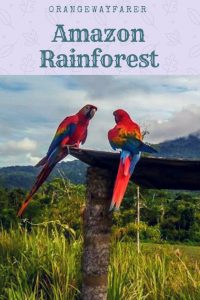 #amazon #rainforest #travelstory #amazon