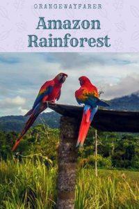 #amazon #rainforest #travelstory #amazon