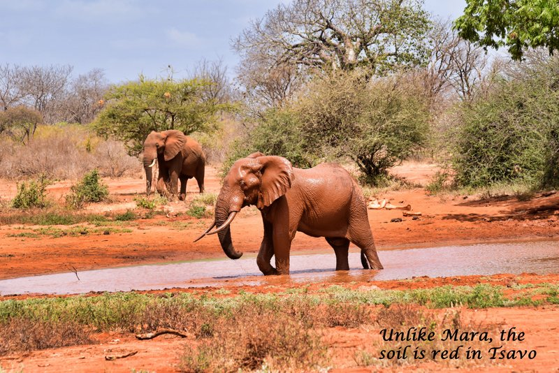 The best Game Reserve in Africa