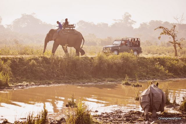 Kaziranga Morning Safari by Elephant at Western Range