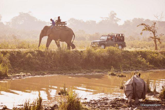 Kaziranga Morning Safari by Elephant at Western Range