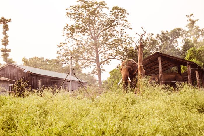 Chitwan Hatisar Elephant Breeding Cente