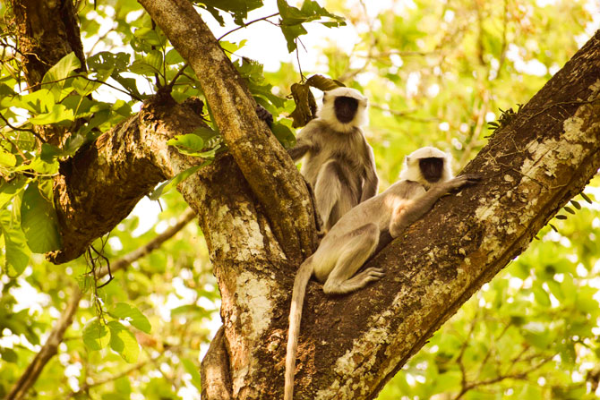 Best safari at Chitwan National Park
