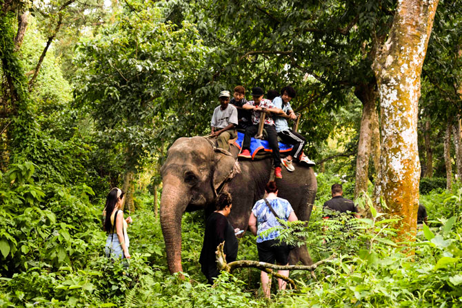 Elephant Safari ride at Chitwan National Park: is it ethical?
