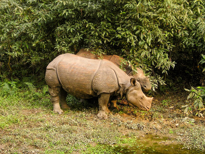Chitwan National park, a UNESCO heritage site: what to do in Chitwan National Park