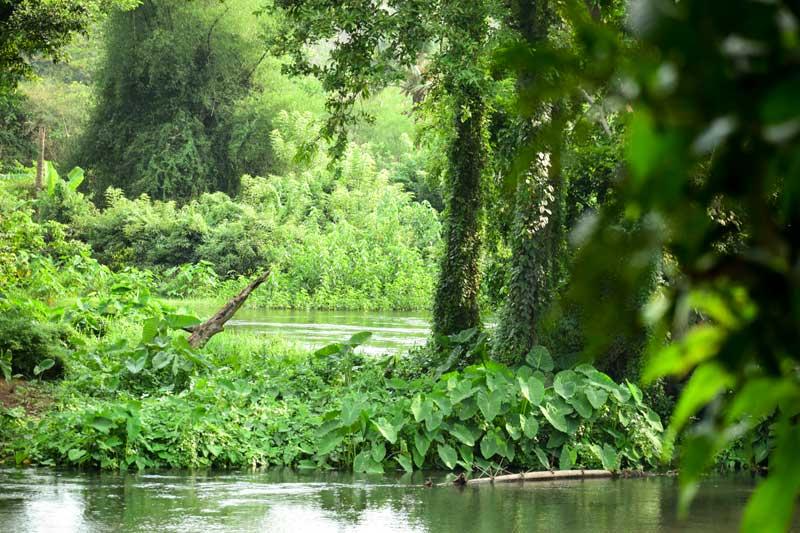 Kali river, Dandeli