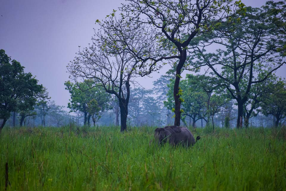 safari experience at Assam. Manas National Park