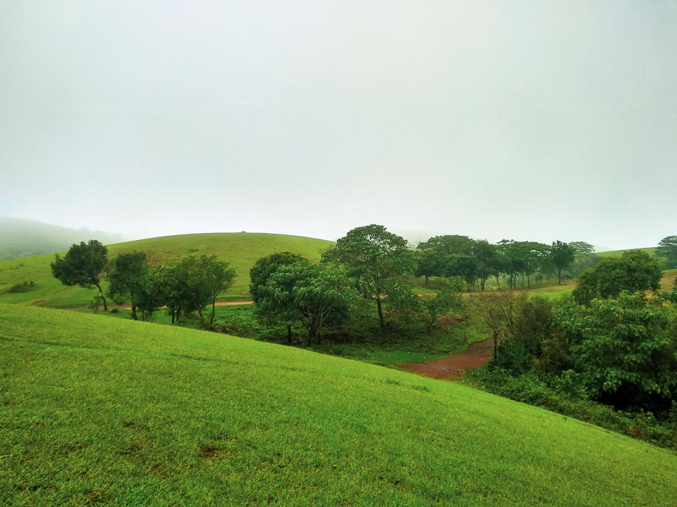Vagamon Meadow: best places to travel in India