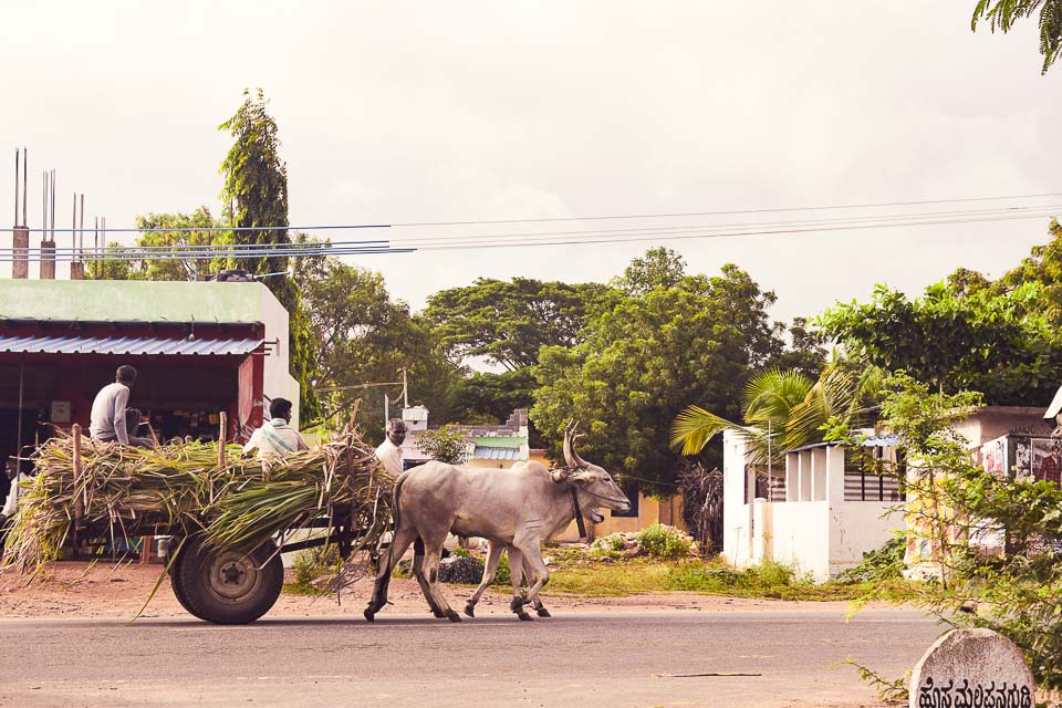 Ox cart in rural India: hampi street photography
