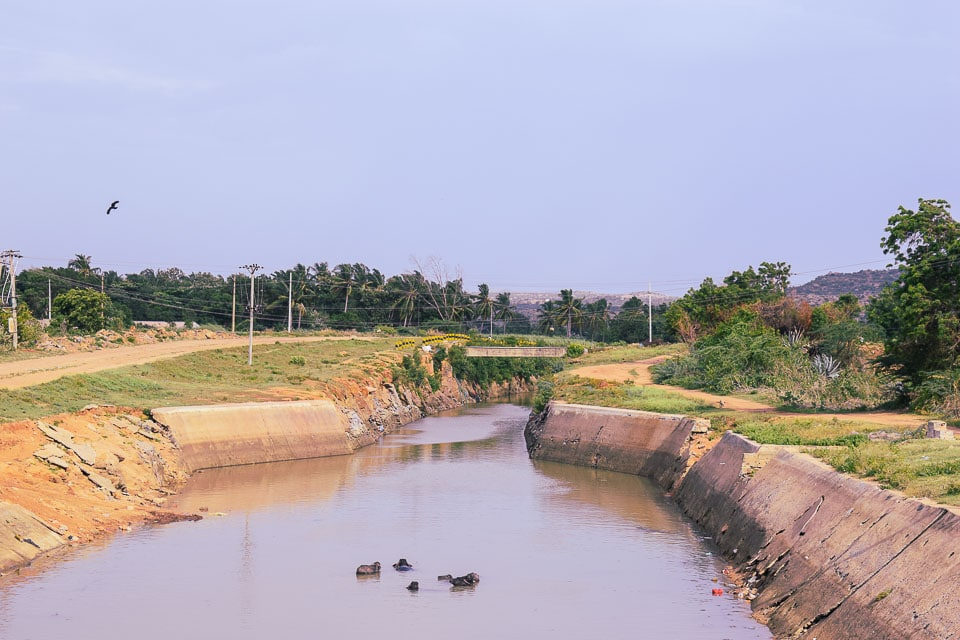 Water buffalo taking bath in water in rural India
