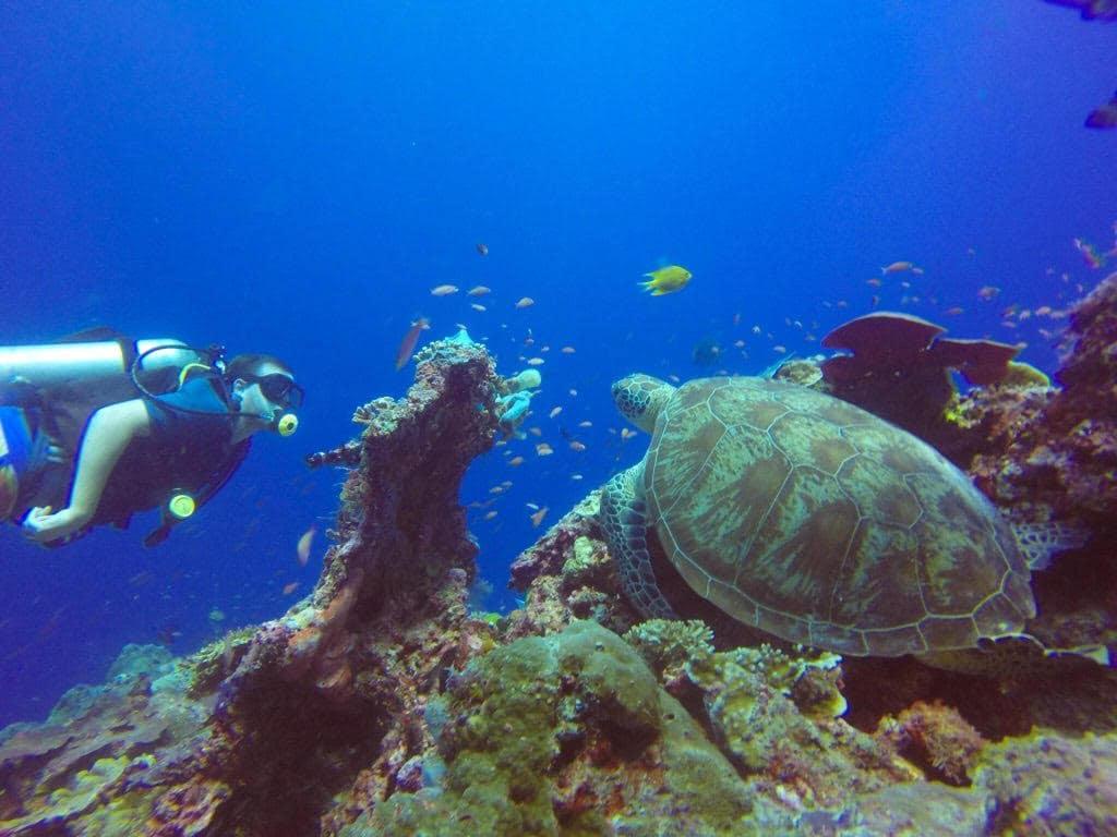 Sipidan island, Offbeat destinations in Malaysia