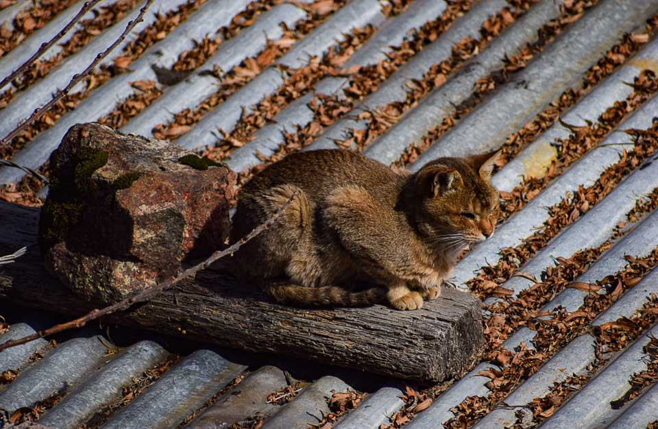 A cat basks under bright sun at Tawang