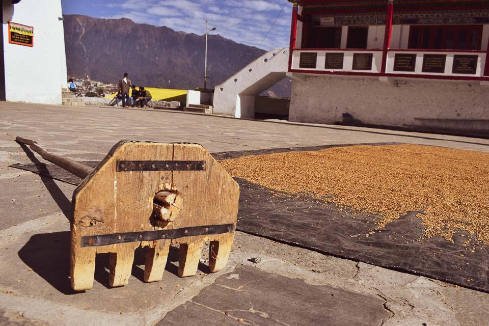 corn being sundried at the Tibetan Monastery